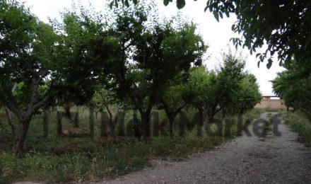 خرید زمین در تهراندشت